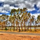 trees in lake fyans by ashara