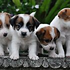 Puppies by Emma Hardcastle