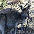 Mrs Kanga by Rick Playle
