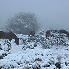 grazing in the snow by David Ford Honeybeez photo