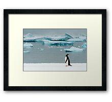 Gentoo on Ice Framed Print