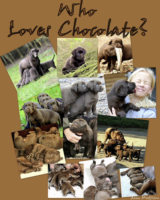 Who loves chocolate ? by Alan Mattison