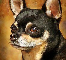 Chihuahua Portrait by Renee Dawson