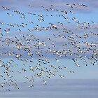 Flight of the Snow Geese by J. L. Gould