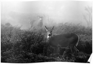 The rut in B&W - White-tailed Deer by Jim Cumming
