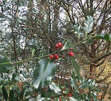 Christmas Soon by Phil Drury