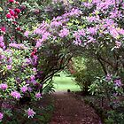 ~ The Rhododendron Path ~ by LeeoPhotography