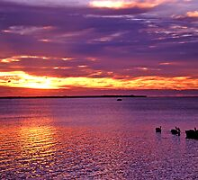 Bringing in the tinny at dawn, Moreton Bay by Robert Ashdown