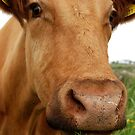 You Nosy Cow! by Rebecca Eldridge