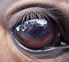 Horses Eye captures photographer by tazzieval