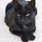 French Black kitten - Burgundy, France by lucynab