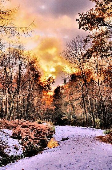 woodland Wonder by JEZ22
