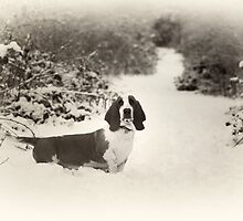 My Bassett Nelson by Rory Garforth