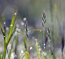 """"""" Wild Seeds """" by helmutk"""
