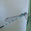Portrait Of A Damsel by Rick Playle
