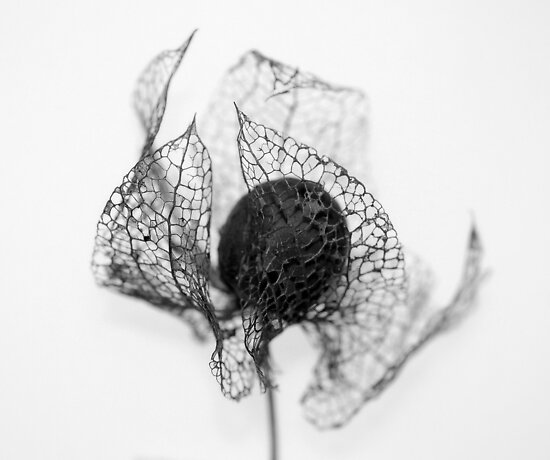 Protection ~ Seedhead  by JUSTART