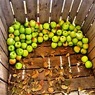 Green Apples by SuddenJim