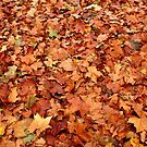 Autumn leaves on The Mall by SpencerCopping