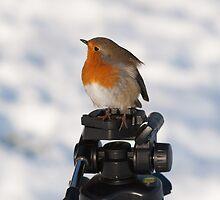 Modelling Robin 2 by Gareth Jones