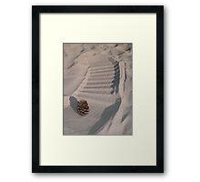 Pinecone Framed Print