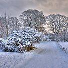 Snowy Path by Tom Gomez
