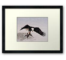 Bald Eagle Captures Duck Framed Print
