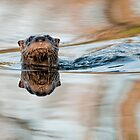 Northern River Otter by Bill Maynard