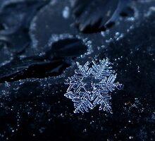 Snow Flake by MistyAdkins