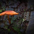 Mushroom by peterperfect