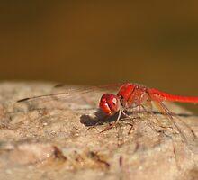Red Dragon by Arthur Koole