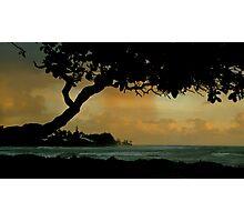 Tree Cover... Kauai Sensual Series Photographic Print