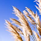 Pampas by maxblack