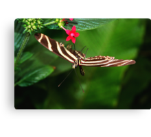 In Balance Zebra Longwing - Heliconius charithonia Canvas Print