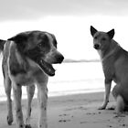 Homeless dogs at the beach in Sabang, Phillipines by Matej Kastelic