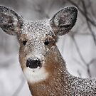 I....hate....snow! - White-tailed Deer by Jim Cumming