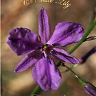 Chocolate Lily - Gippsland by Bev Pascoe