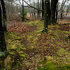 Forest Carpet by BarbL