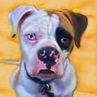 American Bulldog by Iain McDonald
