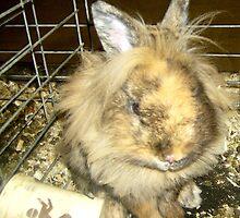 Sad Bunny by ambrosiab