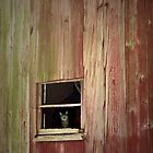 Cat in Window by Kenneth Hoffman