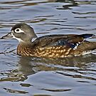 Miss Wood Duck Looking Pretty by Chuck Gardner