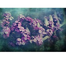 Delicate Love Photographic Print