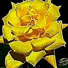 Yellow Rose Glow by Doug Greenwald