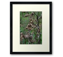 don't be prickle, it's not their fault it's cold Framed Print
