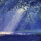 Showers of White Light by reindeer