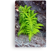 Cluster of Ferns Canvas Print