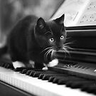 Lily on the Piano by Nicky Stewart