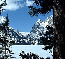 Jenny Lake by Loree McComb