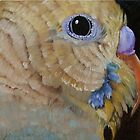Parakeet Close Up by Mary  Hughes