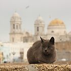a homeless cat in cadiz by Timothy Adams